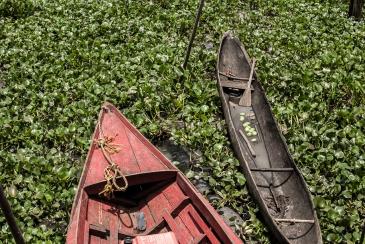 Vida en el Delta del Orinoco